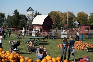 Halloween Events Toronto, Whittamore's Farm