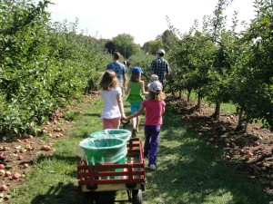 kid-friendly toronto what to do in toronto apple picking