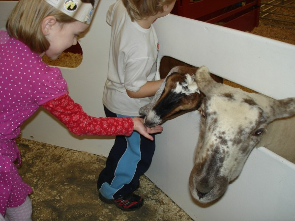 what to do in toronto petting farm