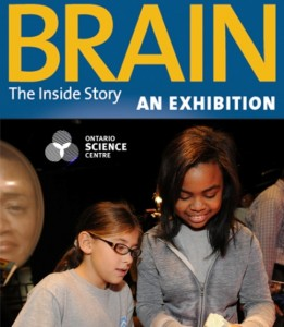 ontario science centre brain exhibit