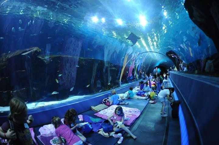 Birthday Party Sleepovers Toronto: Ripley's Aquarium