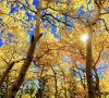 fall-autumn-leaves