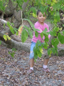 what to do in toronto play outside nature mark yearwood